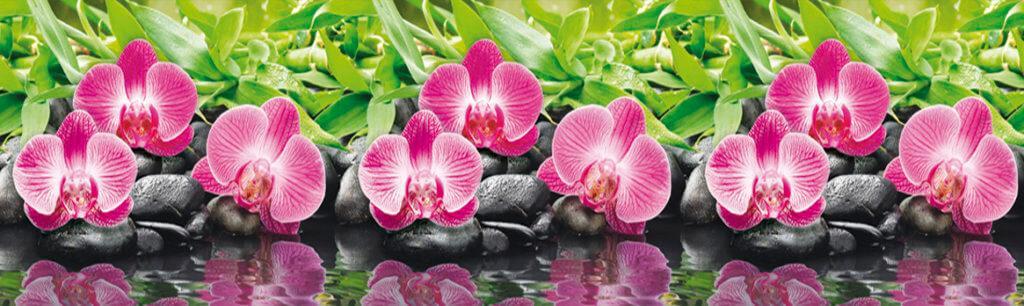 Скинали - Орхидея