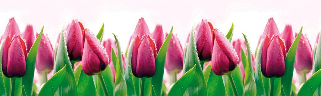Скинали - Тюльпаны